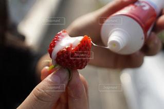 花,冬,屋外,緑,女の子,いちご,苺,フルーツ,いちご狩り,練乳,白苺,フレッシュいちご