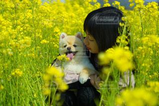 犬の写真・画像素材[1984372]