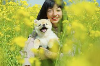 犬の写真・画像素材[2007089]