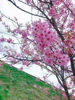木の枝に花の花瓶の写真・画像素材[1038543]