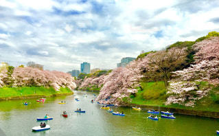 空,桜,雲,ボート,青空,池,満開,ピンクの花,お花見,東京都,千鳥ヶ淵