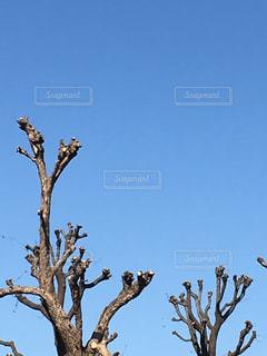木の上の青空の写真・画像素材[1107947]