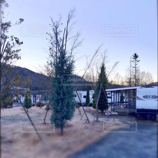 地面の雪の木の写真・画像素材[1107994]