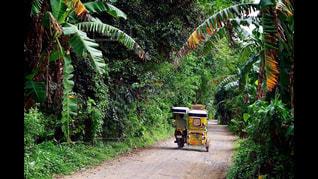 アジアの田舎道の写真・画像素材[1043757]