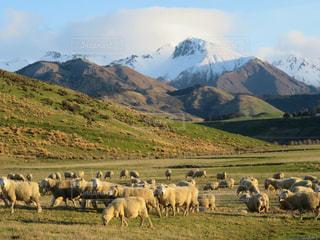 羊山の上に立っての群れの写真・画像素材[1038498]