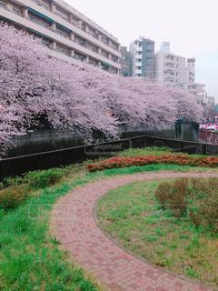 空,建物,春,桜,東京,ピンク,青,川,桜並木,目黒川,中目黒,迫力,興奮
