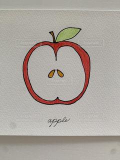 りんごの断面スケッチの写真・画像素材[3302376]