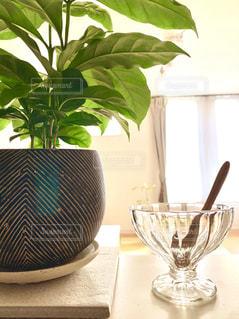 観葉植物とデザートグラス*の写真・画像素材[3305870]