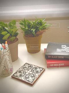 テーブルの上に観葉植物の写真・画像素材[3309230]