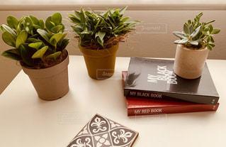 テーブルの上に観葉植物の写真・画像素材[3309231]
