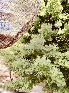 カーテンと緑の写真・画像素材[3315562]