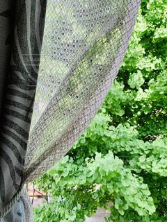 カーテンと緑の写真・画像素材[3315587]