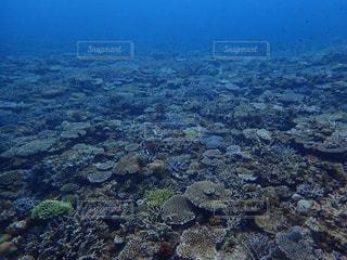 一面珊瑚礁の写真・画像素材[1399548]
