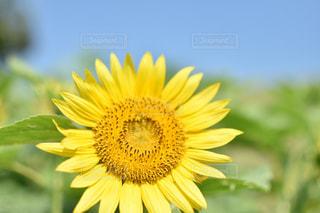 黄色,幸せ,yellow