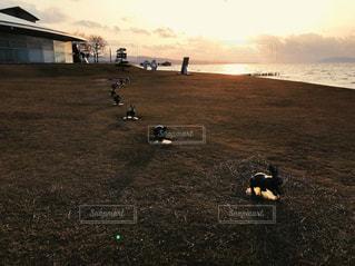 幸せが訪れる宍道湖うさぎの写真・画像素材[1042100]