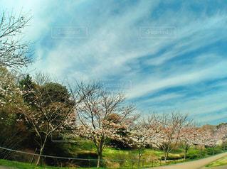 空を求めての写真・画像素材[1094321]
