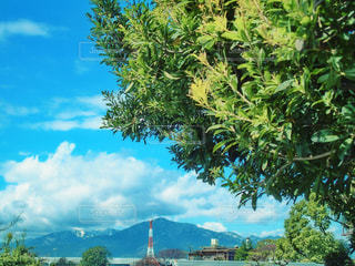 空の青と木の緑の写真・画像素材[1094678]