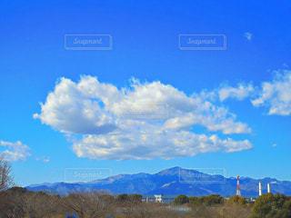 くじら雲を探しての写真・画像素材[1094703]