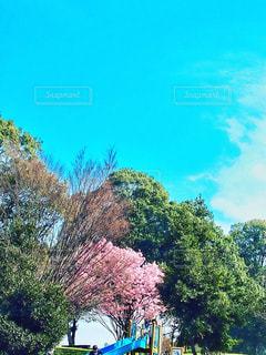 青と青の写真・画像素材[1095251]