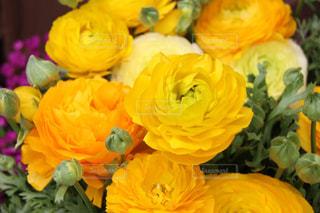 自然,風景,花,植物,黄色,鮮やか,元気,flower,明るい,華やか,カラー,色,黄,彩,きいろ,yellow,ラナンキュラス,近景
