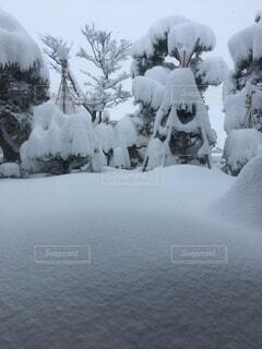 木に覆われる庭木の写真・画像素材[4149942]