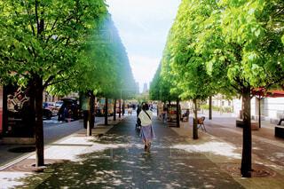 メトロポリタン美術館前の綺麗な並木道の写真・画像素材[4759067]