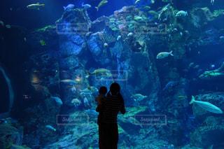 水族館でのシルエット写真の写真・画像素材[1041343]