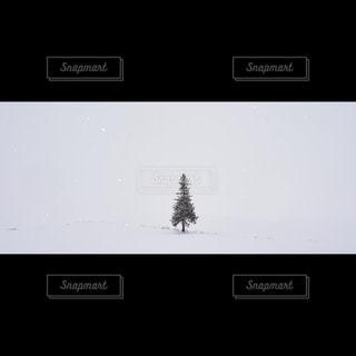 クリスマスツリーの木の写真・画像素材[1042096]