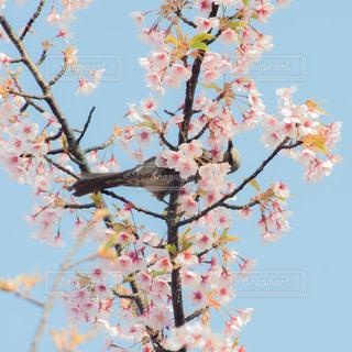 春の歌の写真・画像素材[1094645]