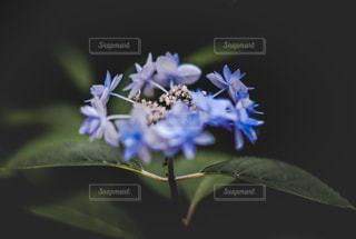 近くの花のアップの写真・画像素材[1219391]