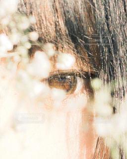 かすみ草から覗いての写真・画像素材[1370589]