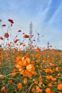 カラフルな花の植物の写真・画像素材[1467966]