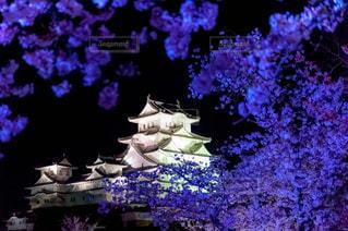 姫路城夜桜ライトアップの写真・画像素材[1145606]