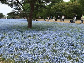 公園の人々 のグループの写真・画像素材[1042098]