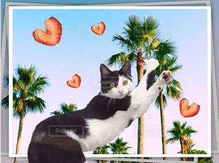 ヤシの木の前で踊る猫の写真・画像素材[1112528]