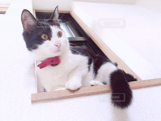 小窓に座る猫の写真・画像素材[1255599]