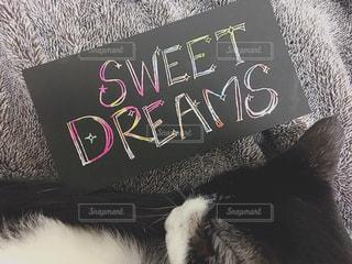 手書きメッセージと眠る猫の写真・画像素材[1943870]