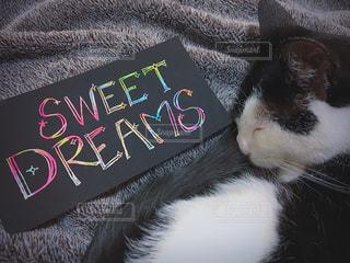 ベッドの上で横になっている猫と手書きメッセージの写真・画像素材[1943962]