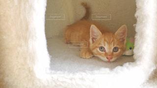 上目遣いにカメラを見ている子猫の写真・画像素材[2294642]