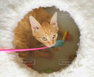 遊ぶ子猫の写真・画像素材[2331207]