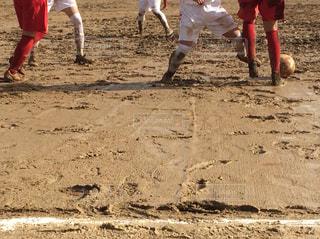 泥だらけの試合の写真・画像素材[1310309]