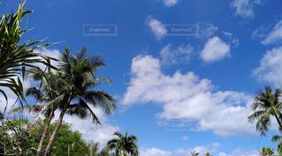 グアムの青空の写真・画像素材[1101380]