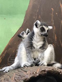 近くに動物のアップの写真・画像素材[1043549]