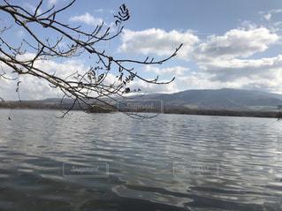 水の体の横にあるツリーの写真・画像素材[1043570]