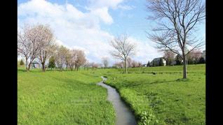 近くに緑豊かな緑のフィールドの - No.1048313