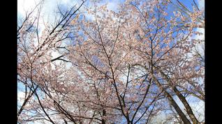 近くの木のアップの写真・画像素材[1048317]