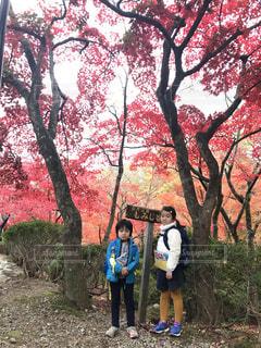 弥彦公園もみじ谷 - No.1044114