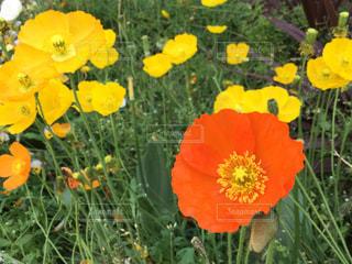 近くの花のアップ - No.1139067