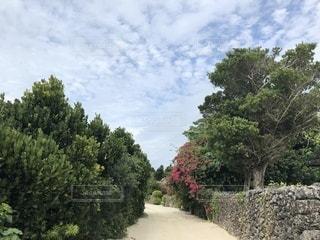 庭の大きな木の写真・画像素材[1048648]