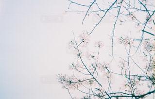 木の枝にとまった鳥の写真・画像素材[1684137]